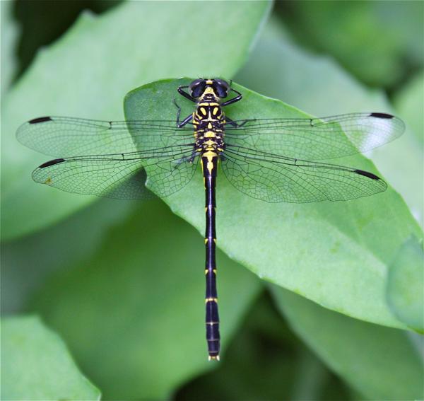 dragonfly2_sm